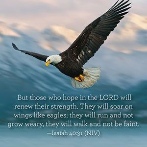 Soar on wings like eagles, Isaiah 40:30-31